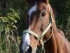 RBW-Schulpferd-Leona