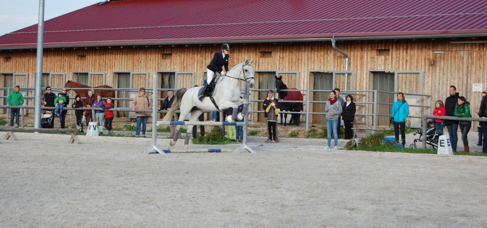 Reiterpass und Reiternadel Prüfung 2016